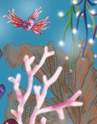 Reef teaser